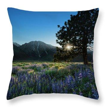 Sierra Throw Pillows