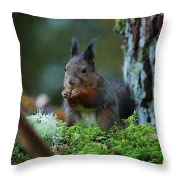 Eating Squirrel Throw Pillow