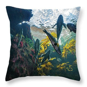 Ecosystem In A Kelp-filled Tank Throw Pillow