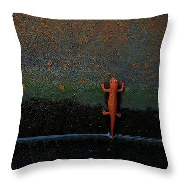 Salamander Home Decor