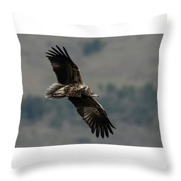 Egyptian Vulture, Sub-adult Throw Pillow