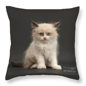 Throw Pillow featuring the photograph Electric Kitten by Warren Photographic