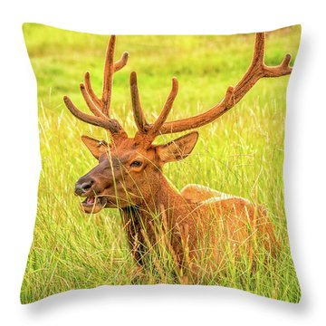 Throw Pillow featuring the photograph Elk by Dheeraj Mutha