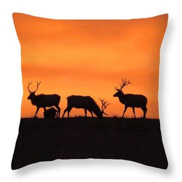 Elk In The Morning Light Throw Pillow