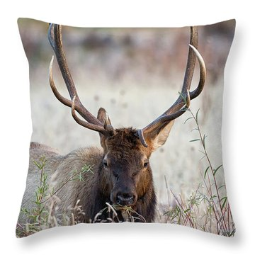 Throw Pillow featuring the photograph Elk Portrait by Nathan Bush