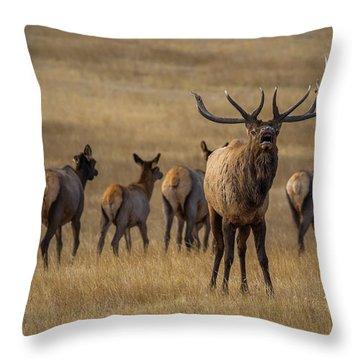 Elk Rut In Full Swing Throw Pillow