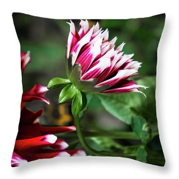 Emerging Dahlia Throw Pillow