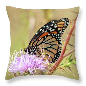 Throw Pillow featuring the photograph End Of Summer Glow Monarch Butterfly by Lara Ellis