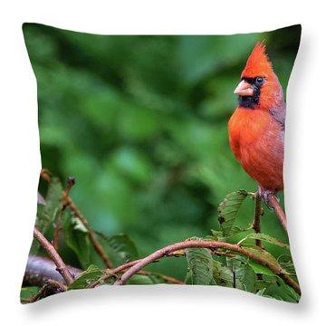 Envy - Northern Cardinal Regal Throw Pillow
