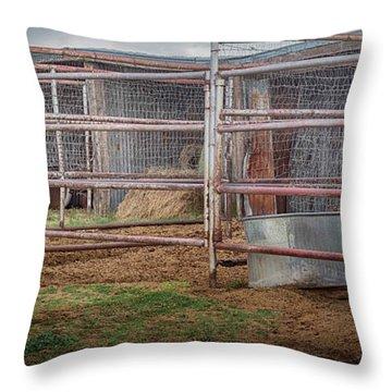 Equine Feline Throw Pillow