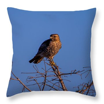 Evening Look Out Throw Pillow