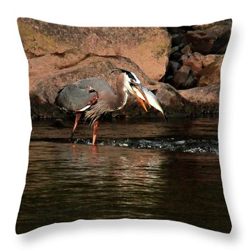 Throw Pillow featuring the photograph Eye To Eye by Debbie Stahre