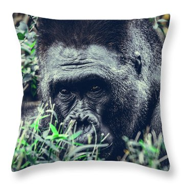 Throw Pillow featuring the photograph Eyes Speak by Dheeraj Mutha