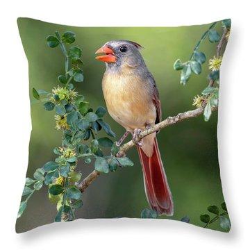 Fabulous Female Cardinal Throw Pillow