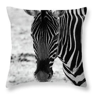 Face Of Zebra Throw Pillow