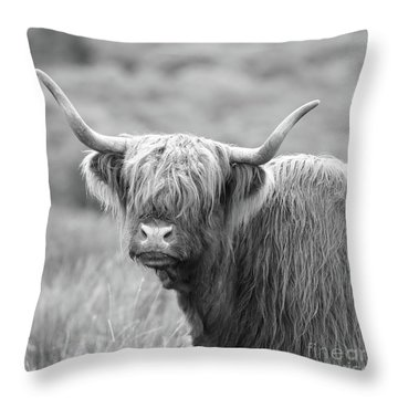 Face-to-face With A Highland Cow - Black And White Throw Pillow