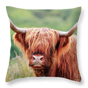 Face-to-face With A Highland Cow Throw Pillow