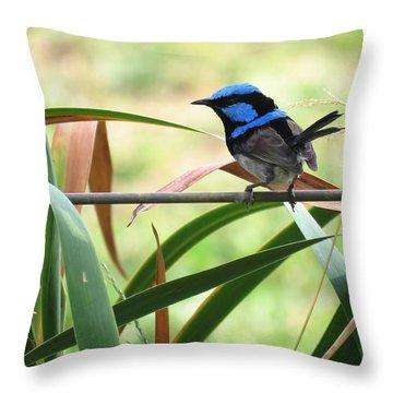 Fairy-wren 1 Throw Pillow