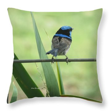 Fairy-wren 2 Throw Pillow
