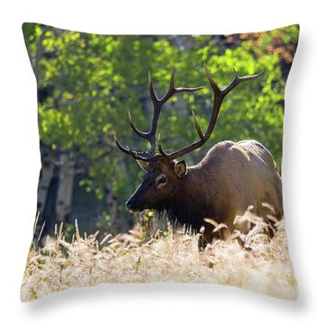 Fall Color Rocky Mountain Bull Elk Throw Pillow