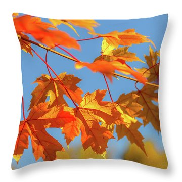 Throw Pillow featuring the photograph Fall Foliage by Dheeraj Mutha