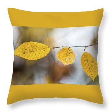 Throw Pillow featuring the photograph Fall In Triplicate by Michael Arend