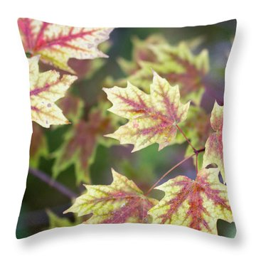 Fall Red And Yellow Leaves 10081501 Throw Pillow