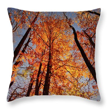 Fall Trees Sky Throw Pillow