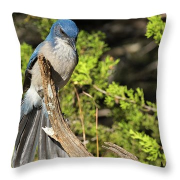 Fanning Scrub Jay Throw Pillow