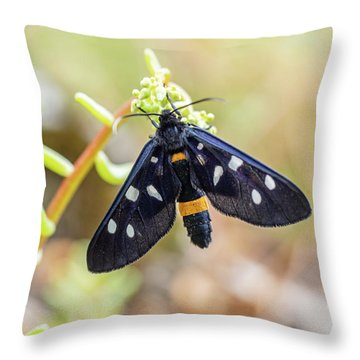 Fegea - Amata Phegea -black Insect With White Spots And Yellow Details Throw Pillow