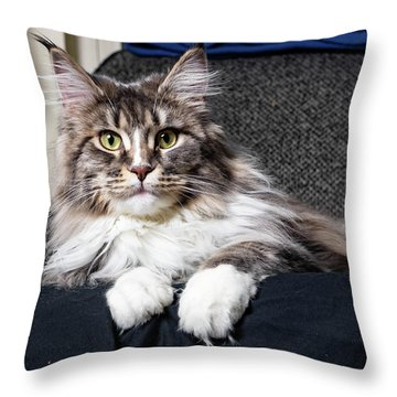 Feline Beauty Throw Pillow