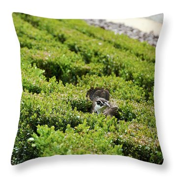Female Peafowl Among The Bushes In Retiro Park, Madrid, Spain Throw Pillow