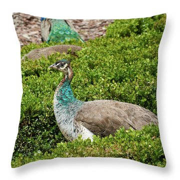 Female Peafowl At The Gardens Of Cecilio Rodriguez In Madrid, Spain Throw Pillow