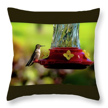 Throw Pillow featuring the photograph Female Ruby Perched by Onyonet  Photo Studios