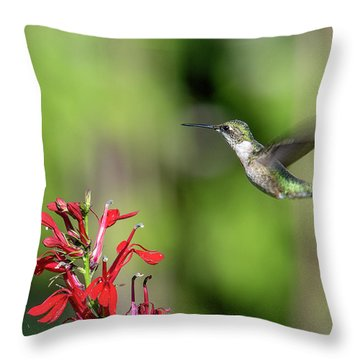 Female Ruby-throated Hummingbird Dsb0320 Throw Pillow