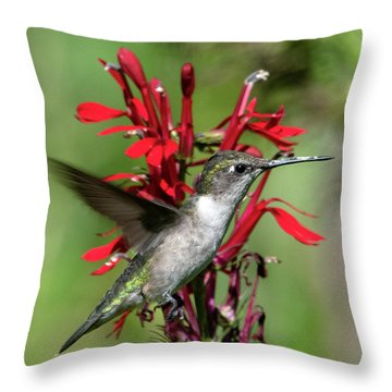Female Ruby-throated Hummingbird Dsb0325 Throw Pillow