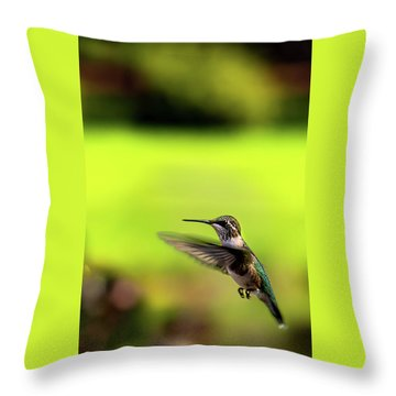 Throw Pillow featuring the photograph Female Ruby Wings Forward by Onyonet  Photo Studios