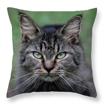 Feral Cat Throw Pillow