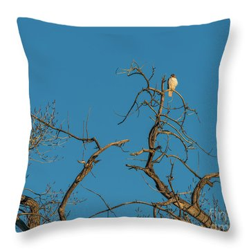 Throw Pillow featuring the photograph Ferrunginous Hawk In Tree by Jon Burch Photography