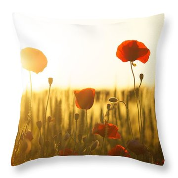 Field Of Poppies At Dawn Throw Pillow