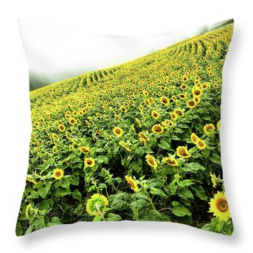 Throw Pillow featuring the photograph Fields Of Yellow by Shane Kelly