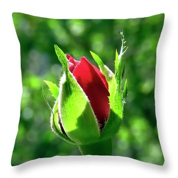 Throw Pillow featuring the photograph First Day Of My Small Red Rose by Johanna Hurmerinta
