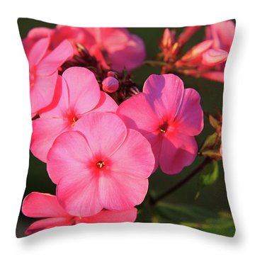 Flaming Pink Phlox Throw Pillow