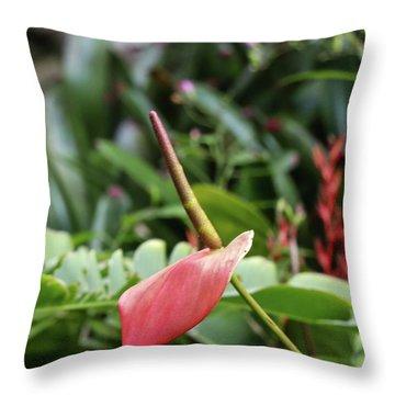 Flamingo Flower - Anthurium Andreanum Throw Pillow