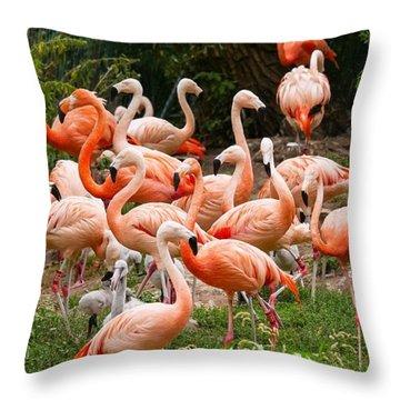 Flamingos Outdoors Throw Pillow