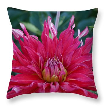 Throw Pillow featuring the photograph Floral Melody #4 by Ahma's Garden