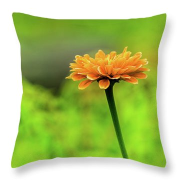 Throw Pillow featuring the photograph Flower by Dheeraj Mutha