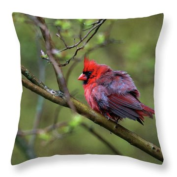 Fluffing Up My Feathers Throw Pillow