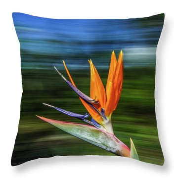 Flying Bird Of Paradise Throw Pillow
