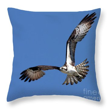 Focused Osprey Throw Pillow
